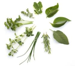herbs blog 2a
