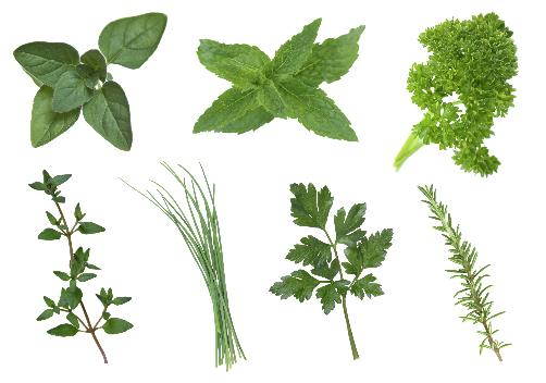 herbs blog