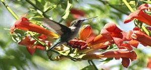 hummingbird garden 2