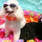 dog-summer-2jpg