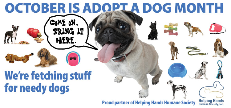 October is Adopt-a-dog month the library is collecting dog toys and bedding
