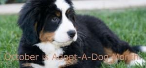 Dog Grooming Supplies Websites