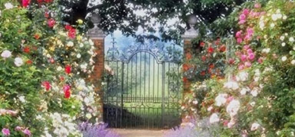 dreaming of gardens