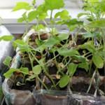 starting seeds2