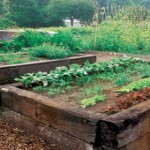 raised garden beds pic