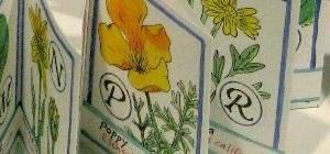 Spring Wildflower ABC detail