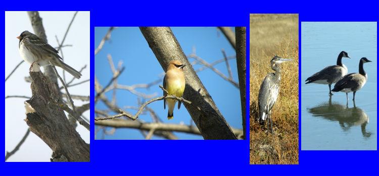 wildbirdsprogram2012