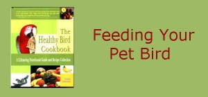 Feeding Your Pet Bird