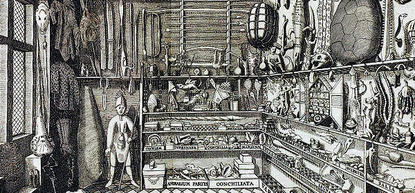 Ole worm's cabinet of curiosities