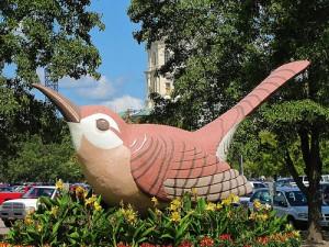 Giant wren