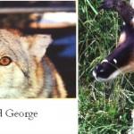 Smokey and George