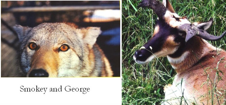 Smokey and George