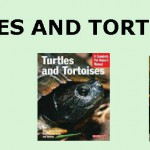 turtles feature