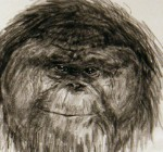 Alice Sabatini's drawing of Jim the orangutan as an adult shows his personality.