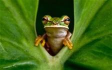 frog-new-granada_1765148c