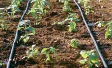 drip irrigation blog pic