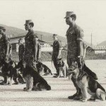 vietnam war dogs