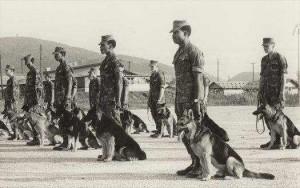 vietnam war dogs