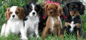 puppyweek13