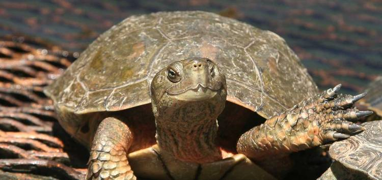turtlesayshi2