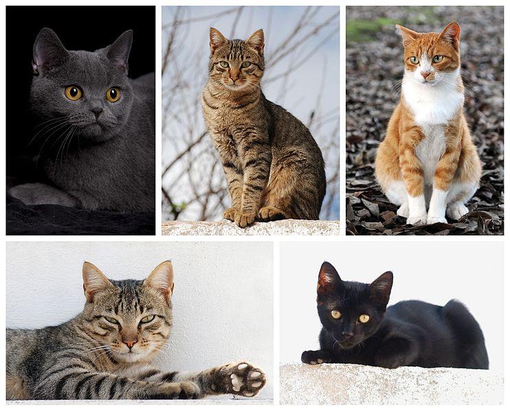 Cat_poster_2