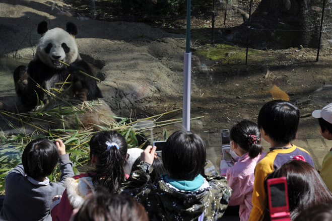 Pandas Shown At Tokyo's Ueno Zoo For 1st Time In 3 Years