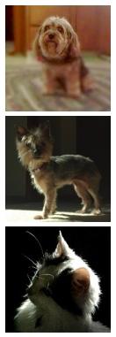 pet 3 dog comp