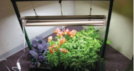 Artificial-lights-for-indoor-plants
