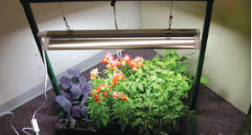 Growing Plants Indoors Using Artificial Light Topeka