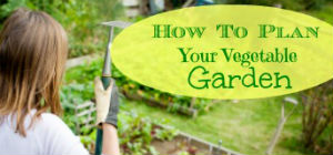 how-to-plan-your-vegetable-garden