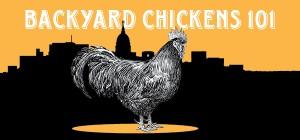 backyard chickens_600pxX280px.biggraphic