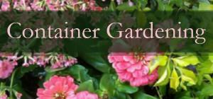 Container Gardening blog image