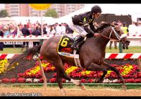 Oxbow051813-01 from Preakness-com 2013