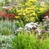 garden dreams2