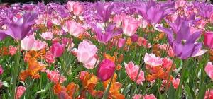 spring bulbs_feature1