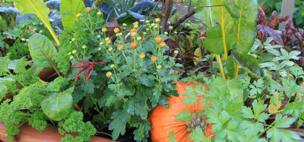 fall edible container_rhonda fleming hayes_feature