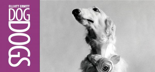 dog with rose collar
