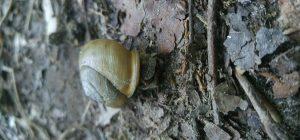 snail AR