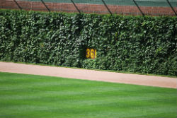 wrigley-field-ivy-resized