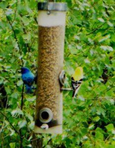 Attracting backyard birds | Topeka & Shawnee County Public ...