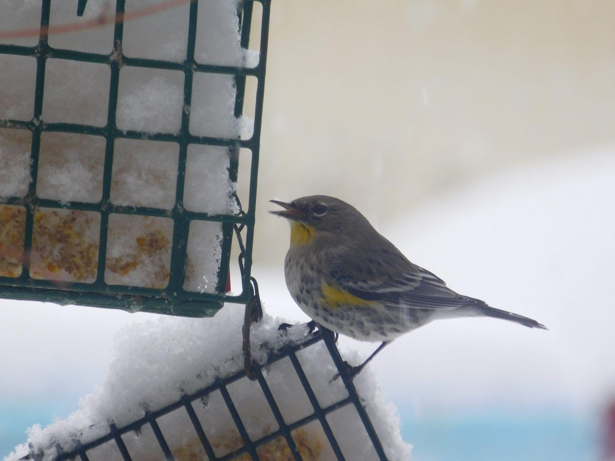 attracting backyard birds topeka u0026 shawnee county public library