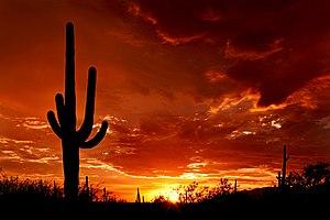 Sunset over Saguaro National Park