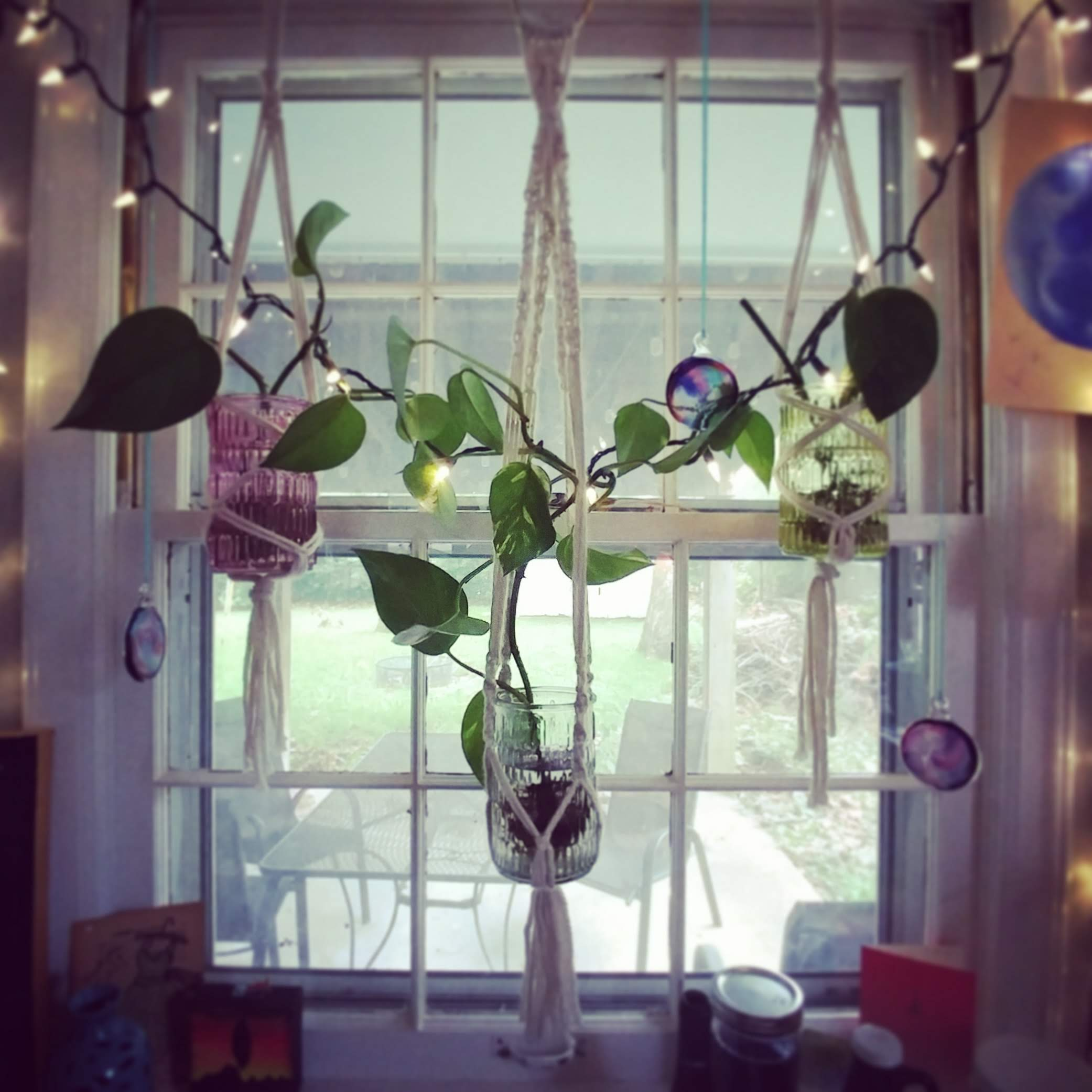 My Macramé Plant Hangers