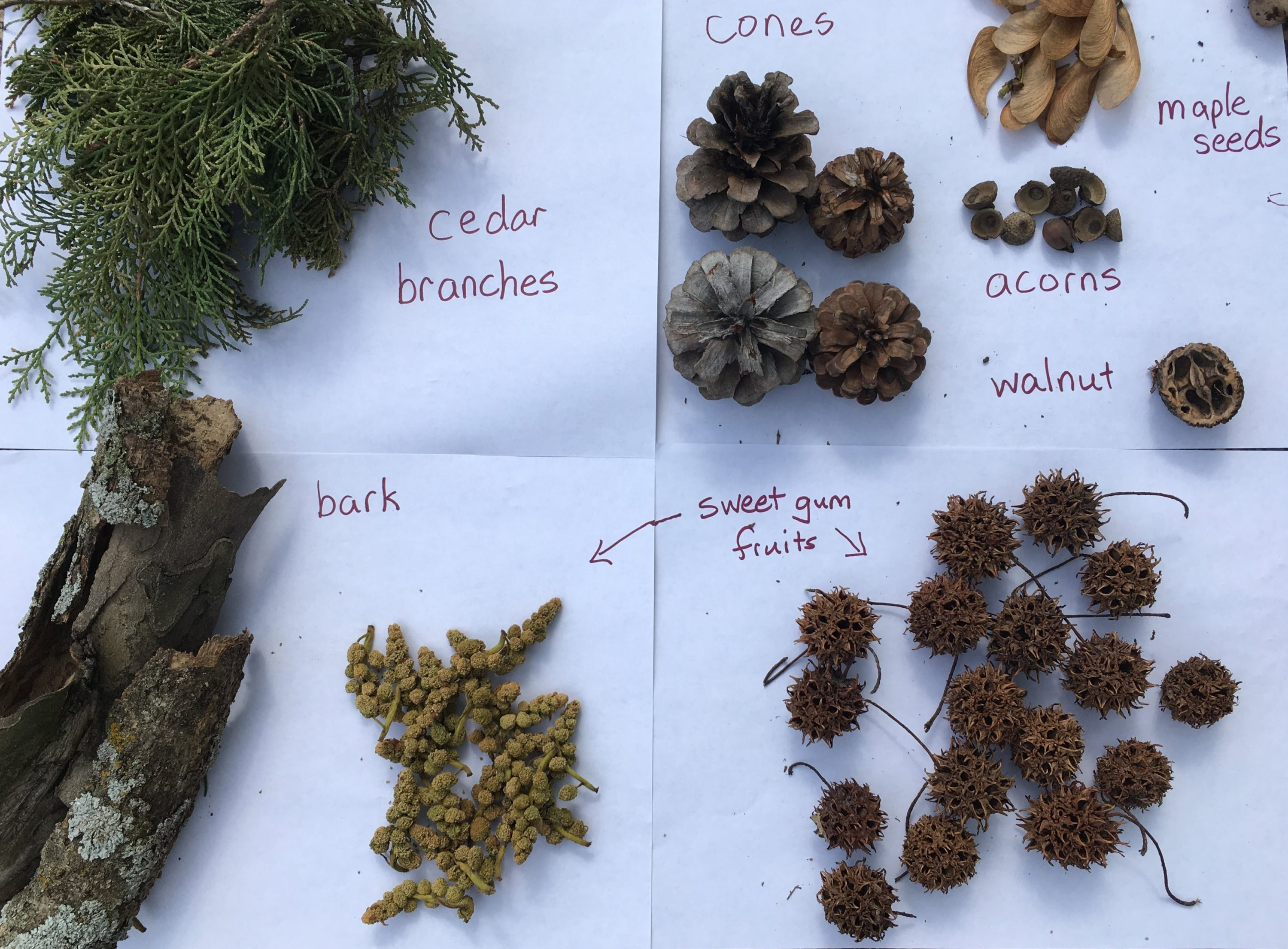 found tree materials: cedar branches, cones, maple seeds, acorns, walnut, bark, sweet gum fruit