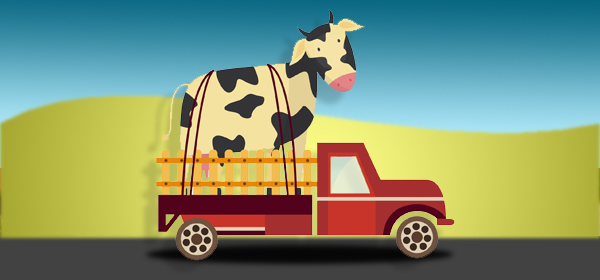 cow in truck image