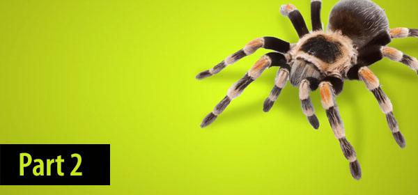 Tarantula Part 2