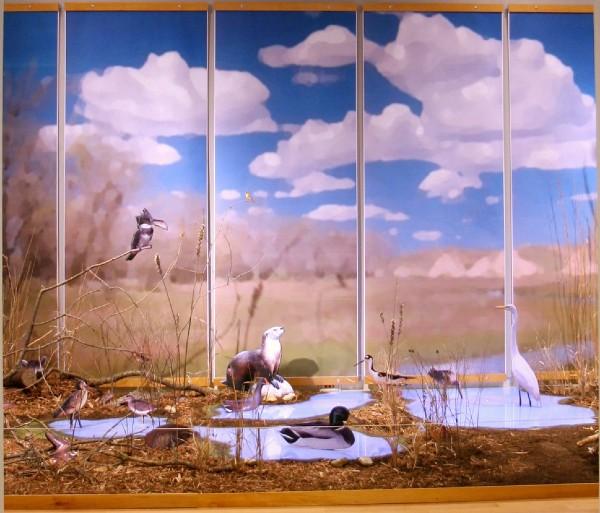 wetland environment in gallery