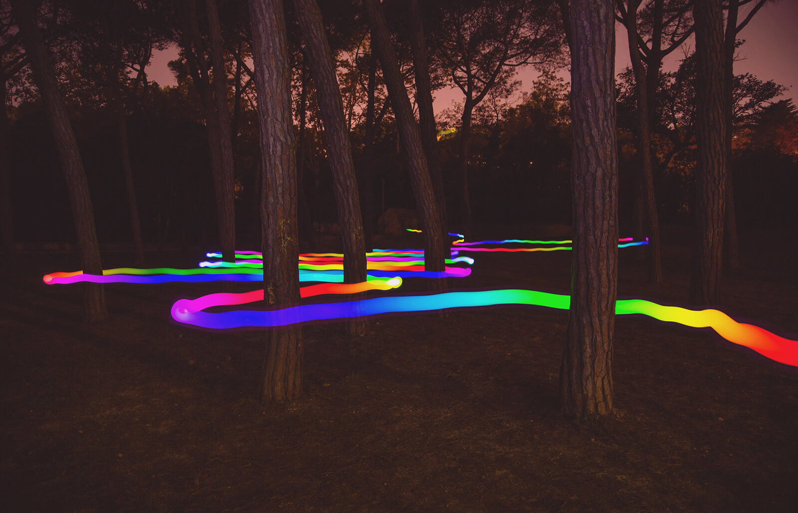 A singular rainbow line darts between a series of trees in the woods, almost as if leaving a path of motion.